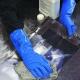 Rukavice Ansell SOL-VEX nitrilové antistatické chemicky odolné tloušťka 0,38 mm délka 330 mm modré